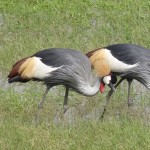 colourful birds2